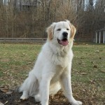 Training Testimonials Thanks Sandy for giving me the dog of a lifetime!