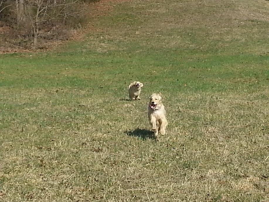 Sadie & Misty